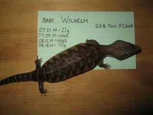 Wilhelm 6 Weeks