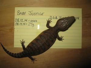 Justice 3 weeks